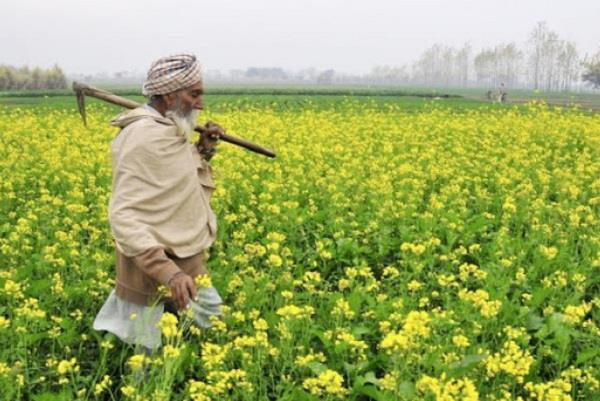help to increase farmers income