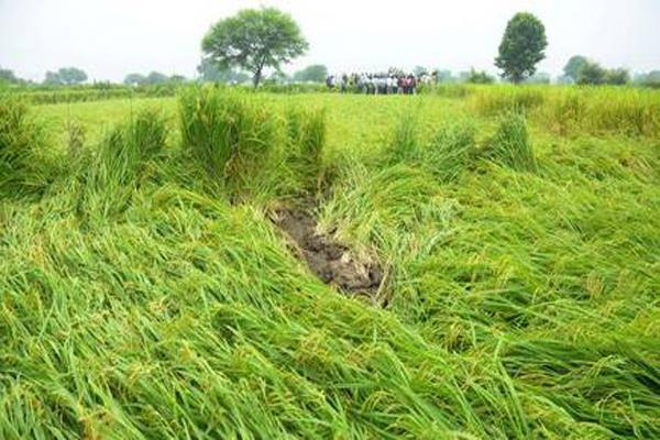 farmers  unseasonal  rains  crops  compensation