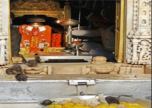 coronavirus maa karni temple 700 years trust worship