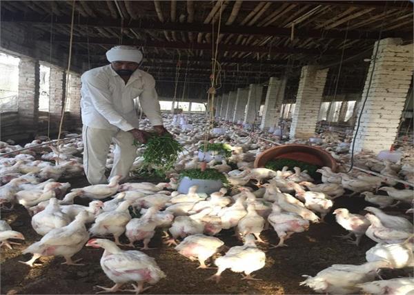 poultry farms  patiala  corona virus