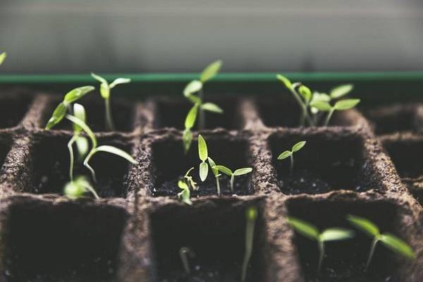 grow microgreens during corona lockdown