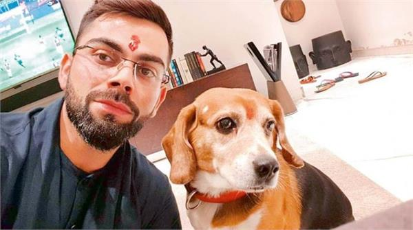 virat  s dear dog no longer  pain described on social media