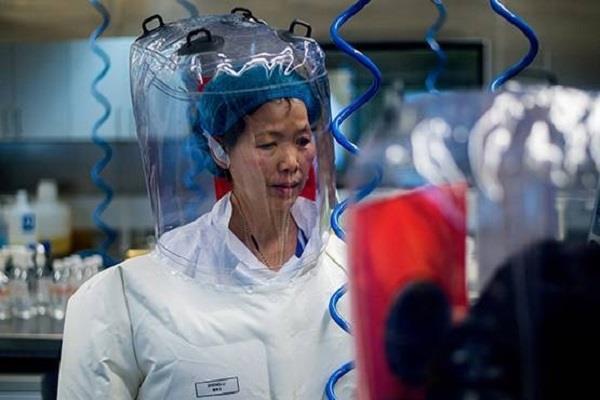 china xi zhengli new virus