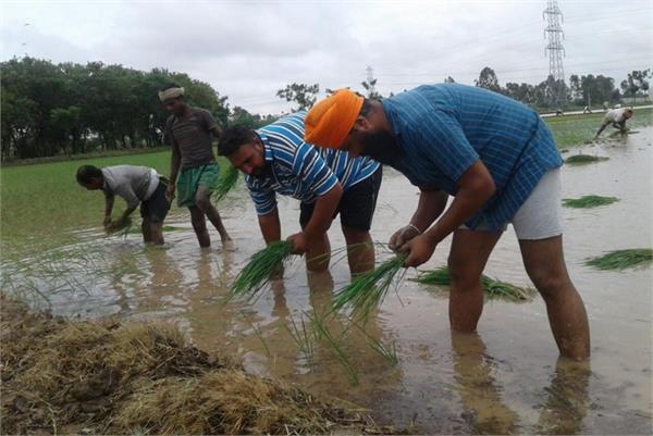 farmer labour relationship price