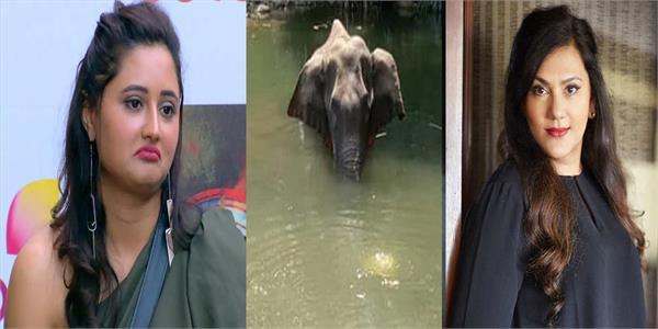 pregnant elephant kerala