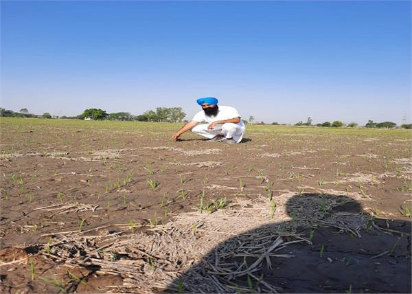 labor sowing paddy dharamkot