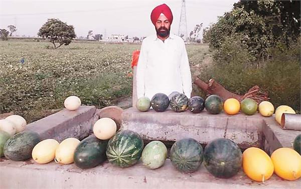 watermelons farming sultanpur lodhi