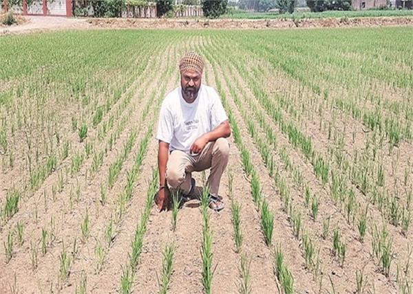 paddy talwandi bhai government farmers electricity
