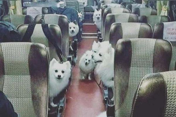private jet fly six pets from delhi to mumbai