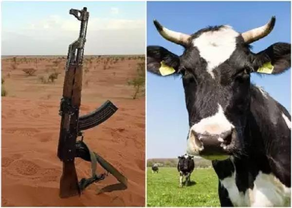 cow to pirates in exchange for ak 47  this unique plan of this country
