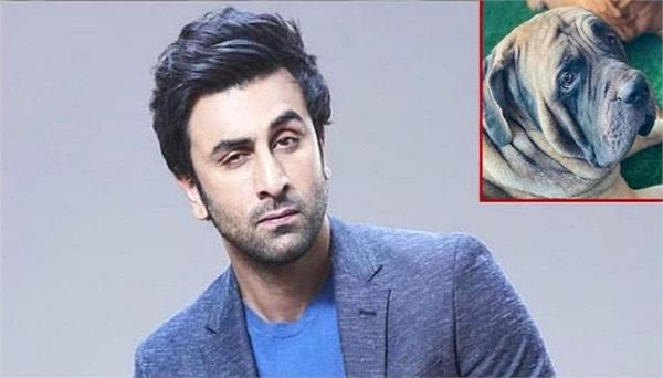 ranbir kapoor gets bitten by his pet dog  rushes to hospital for