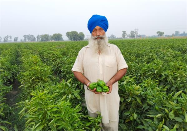 ranjit singh thind capsicum cultivation