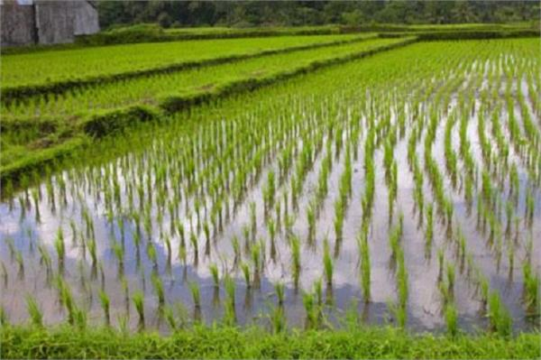 paddy crop direct sowing suitable time