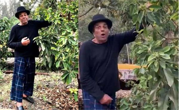 dharmendra  s farmhouse miracle of nature  video shared information