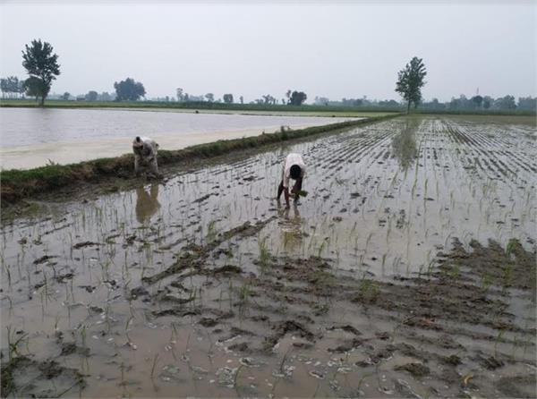 early stage spread of paddy farmers