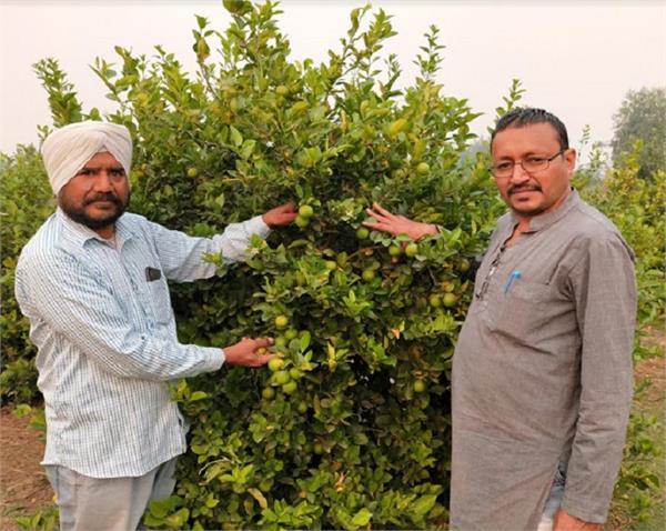 lemons  herbs  dollars  farmer  balbir singh dhillon