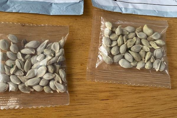 mysterious seed parcels from china poland