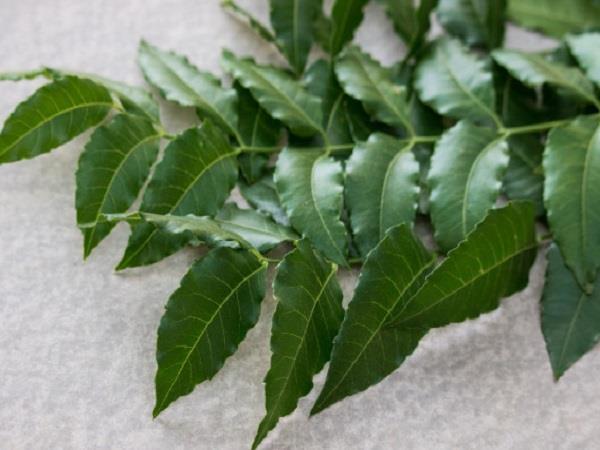 neem body benefits