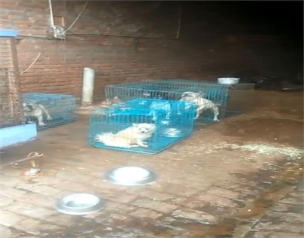 amritsar dog vehicle trace house