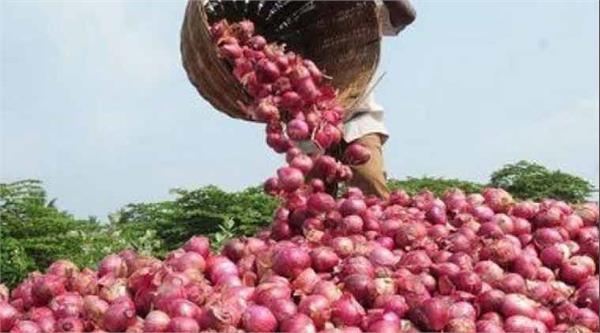 nafed procures 95 000 tonnes of onion to create buffer stock