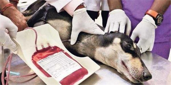 first blood bank for dogs in ludhiana