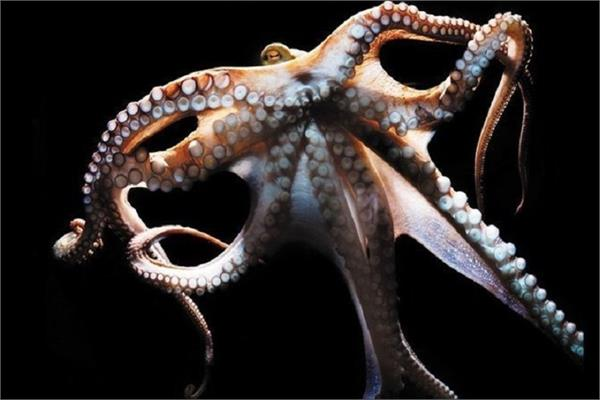 russia is now making octopuses weapons of war will collide with the us at sea