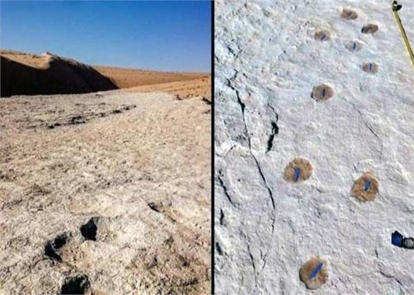 120 000 year old footprints found in saudi arabia