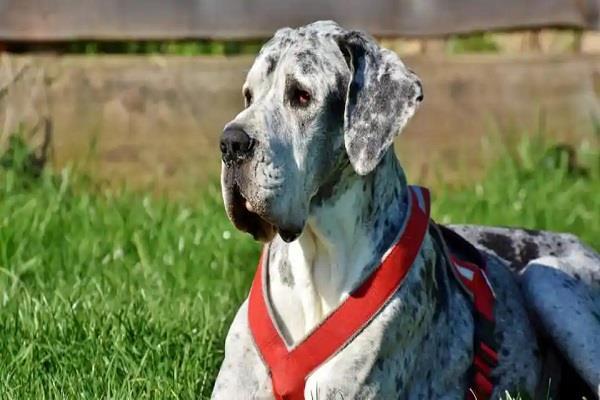 alabama family escapes fire thanks to pet dog s bark