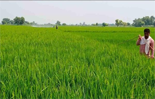 agricultural laws against pass bill question mark