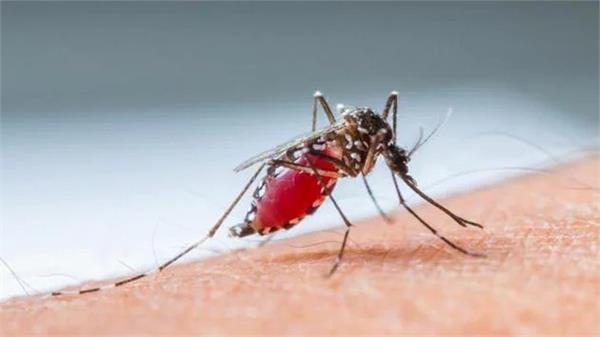 scientists make historic breakthrough in malaria prevention