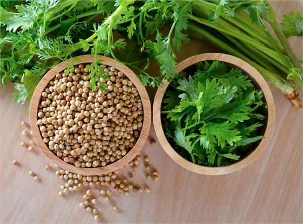 coriander is extremely useful for diabetics other benefits