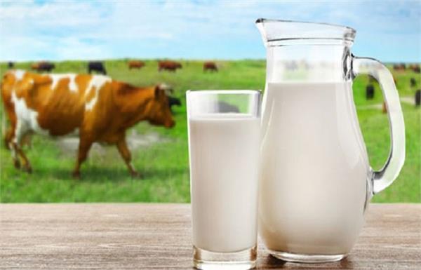 health tips cow buffalo health milk beneficial