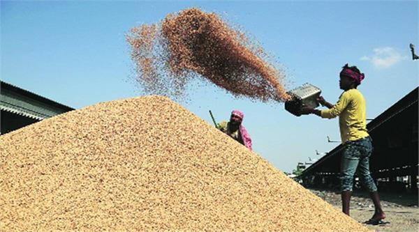 govt procured paddy worth rs 108 lakh crore