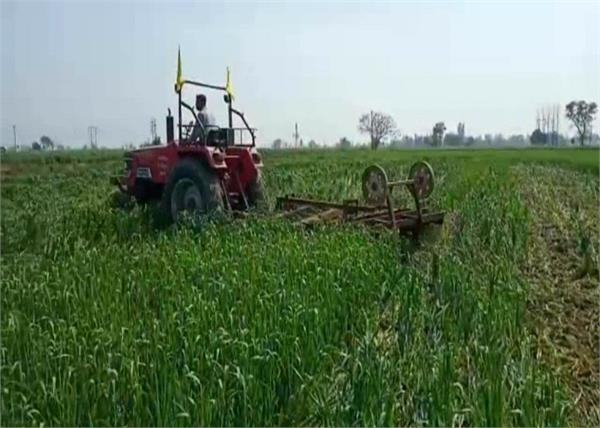 central government opposition tractor wheat sri muktsar sahib
