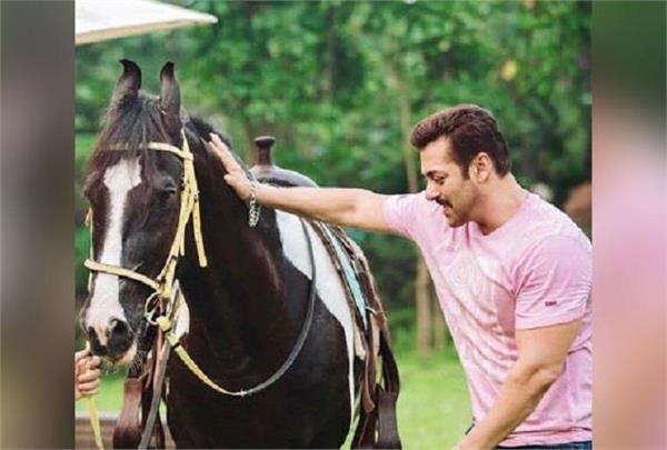 salman khan  s heart came on   paramvir   horse  owner refuses to sell