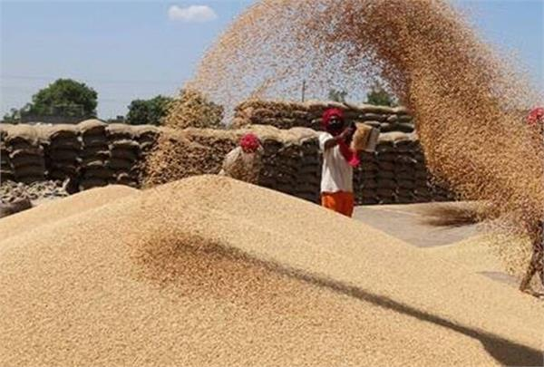 wheat procurement may rise 10 in 2021 22