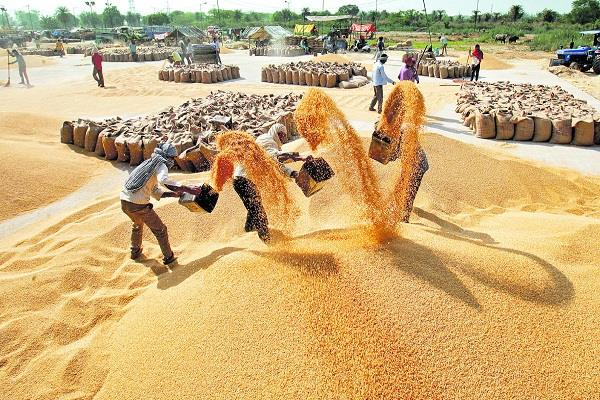 wheat procured on the ninth day of procurement in the state