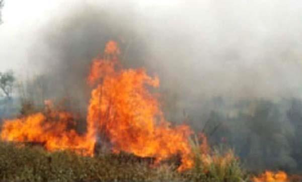 wheat  fire  damage
