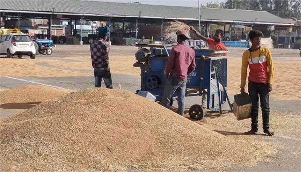 wheat procurement started in district rupnagar