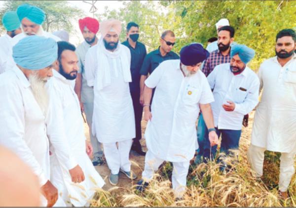 sukhbir badal appeals to cm for crop rotation