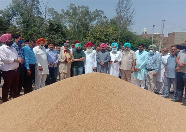 mla zira  grain market  wheat  procurement