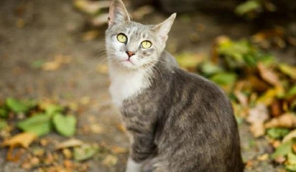 britain  pet cats  death  corona virus