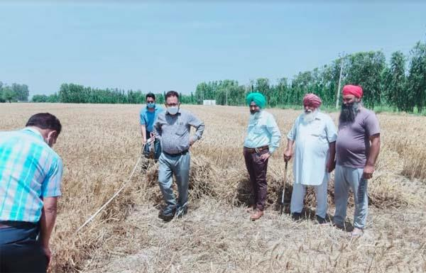 farmers   support to agriculture department in harvesting
