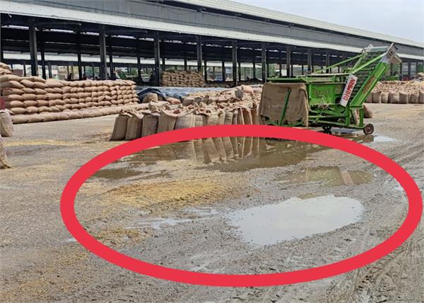 millions of tonnes of wheat rained down in mandis