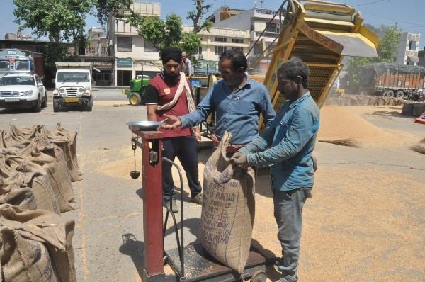 farmers say no problem of bagging in jalandhar mandis