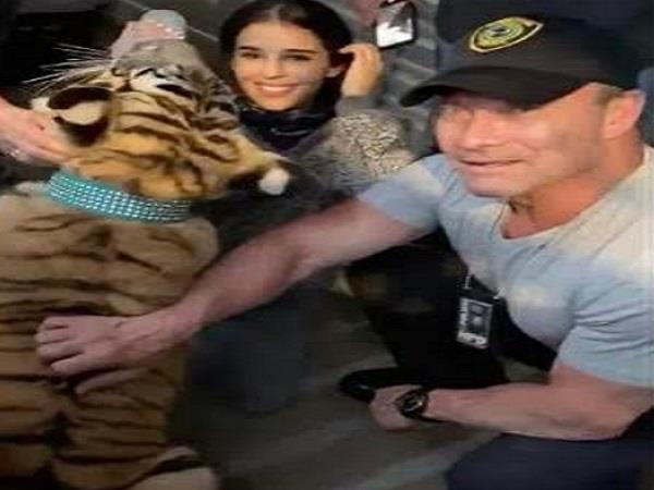 usa  missing tiger found safe in houston last week