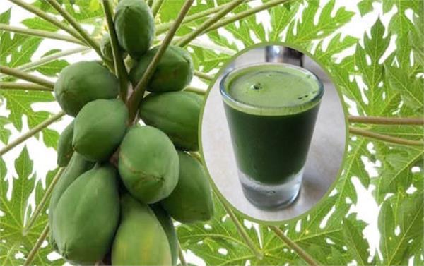 rain  weather  beneficial  papaya  leaves  juice