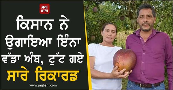 colombian farmer grows world heaviest mango weight above four kg