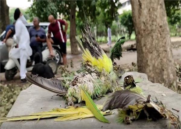 faridkot mini secretariat trees birds