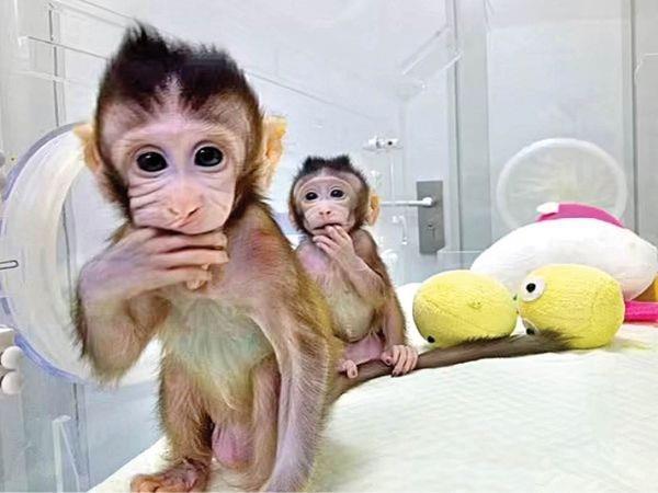 british journalist  corona origin  china  animals